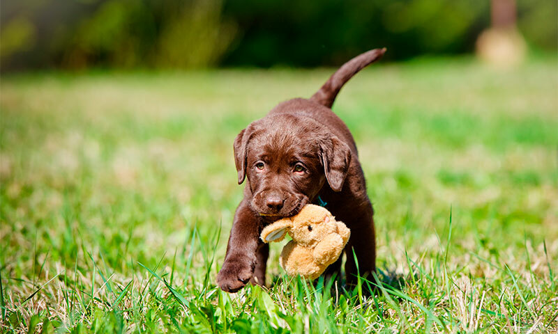 The best feed for puppies on buyers' feedbacks