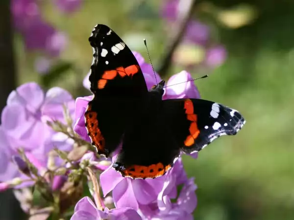 Top 10 of the most beautiful butterflies in the world.