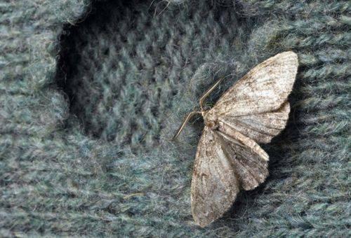 Berömda Hur bli av med moths i en lägenhet: industriella och YL-67