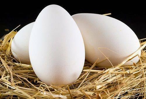 kogte æg i køleskab