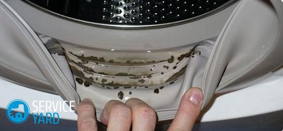 How to clean a washing machine from mold and black fungus quickly at home?